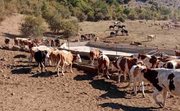 Стигла вода за жедне краве и коње