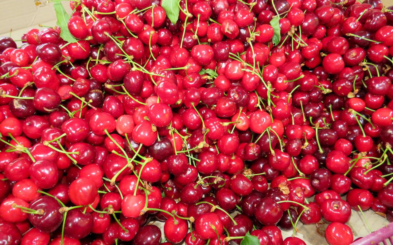 Sezonsko voće i povrće sa pijaca, bezbedno za konzurmiraje