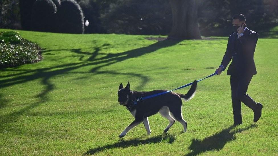 Amerika, Bela kuća i životinje: Bajdenov pas Major ponovo ujeda
