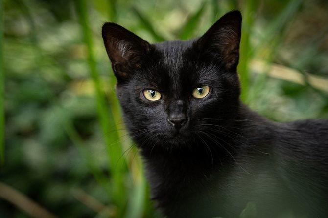 Sujeverje kaže da je mačji pogled jako opasan po čoveka: Evo šta se dešava ako je dugo gledate u oči
