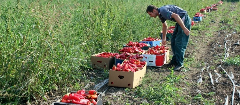 Hoćete da se bavite poljoprivredom? Sada je pravo vreme za to! Svetska banka bespovratno daje 50 MILIONA DOLARA