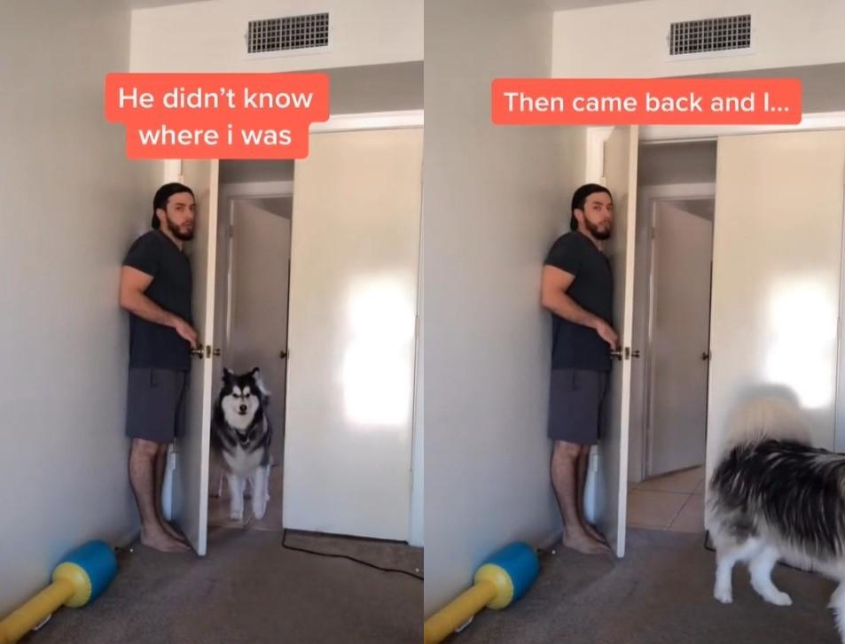 Planirao je da prepadne svog HASKIJA, ali se nije nadao ovakvoj REAKCIJI (VIDEO)