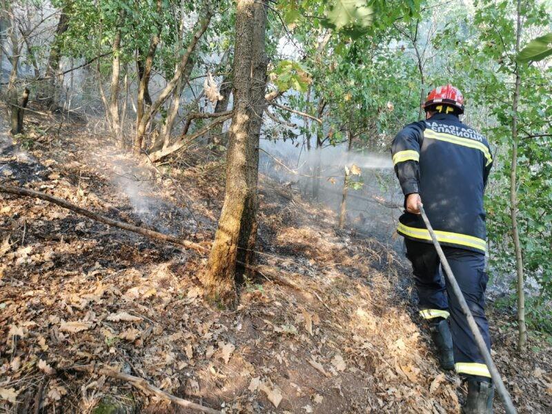 Gori šuma kod Čačka: Požar preti da stigne do kuća, vatrogasci se satima bore sa vatrenom stihijom (FOTO)