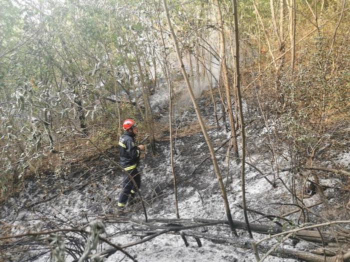 Pala bandera i izazvala požar Vidovi, vatra zahvatila šumu