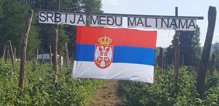 SRBIJA MEĐU MALINAMA Srpska zastava sa ponosom postavljena u malinjaku u Arilju