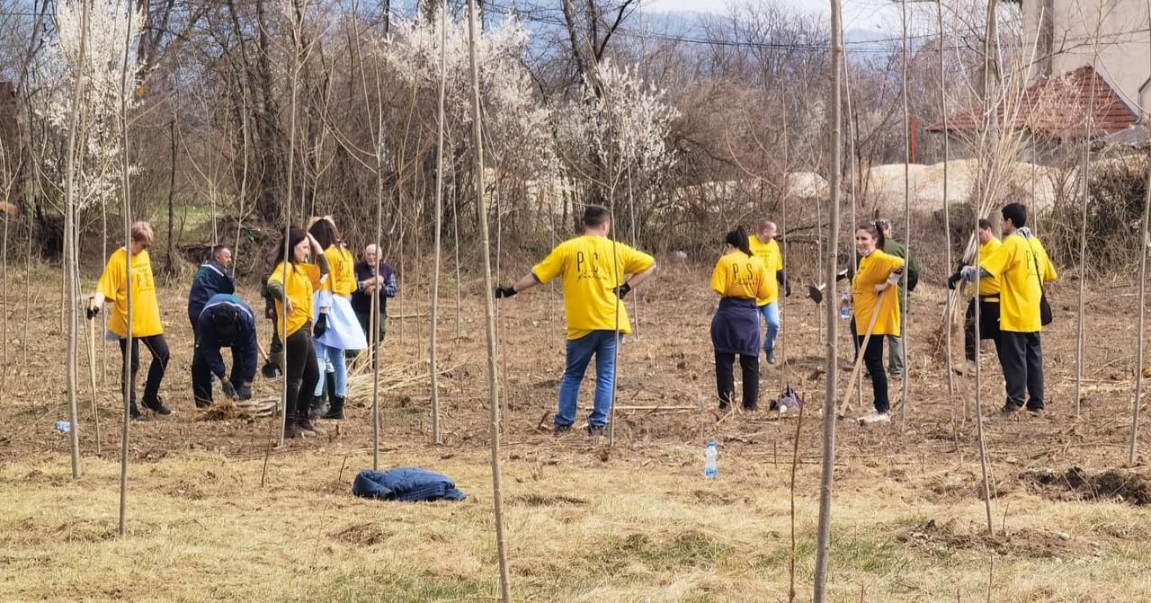 U Konjevićima na 3,5 hektara zasađeno 1.000 sadnica kanadske topole (FOTO)