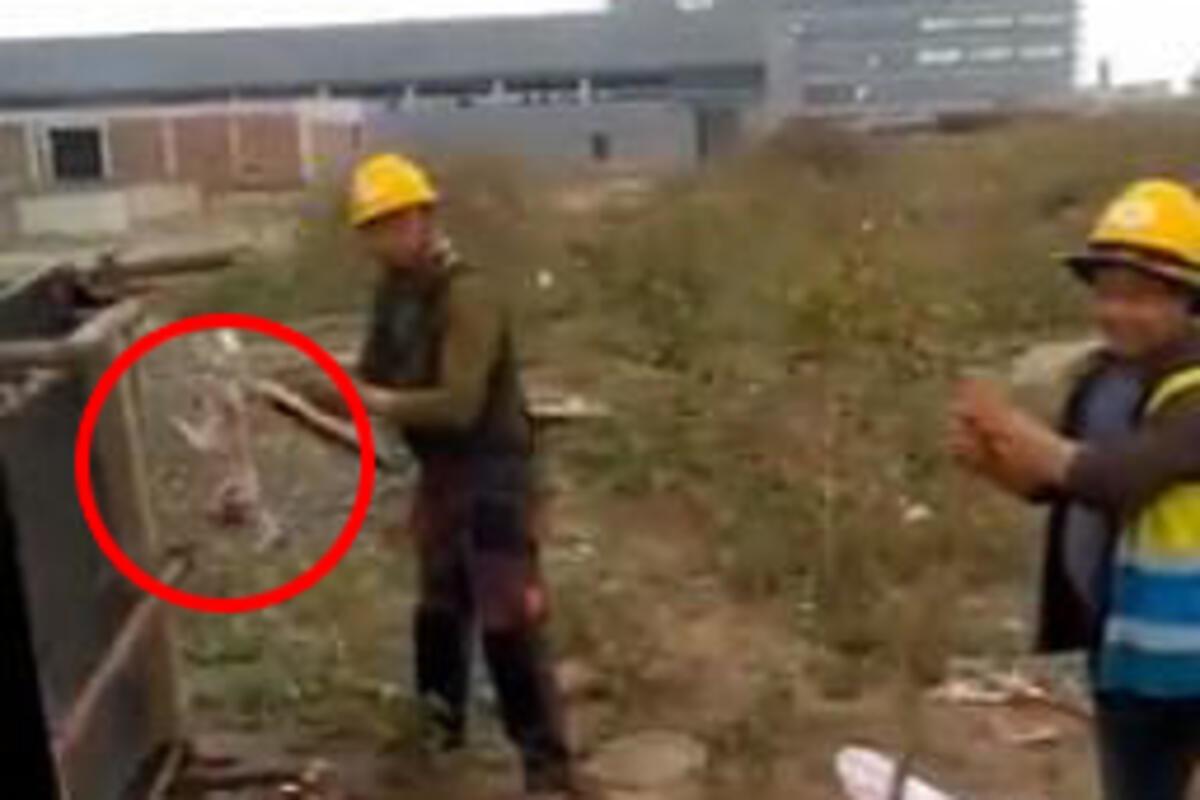 KINESKI RADNICI ODRALI MAČKU DA JE POJEDU? Uznemirujući snimak sa gradilišta u Zrenjaninu (VIDEO)