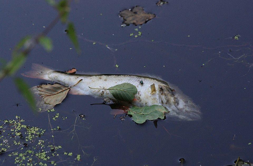 Pomor ribe u Kolubari