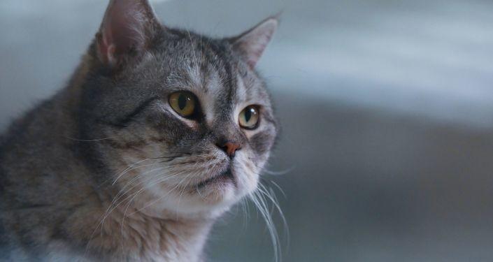 Русија регистровала прву вакцину против вируса корона за животиње