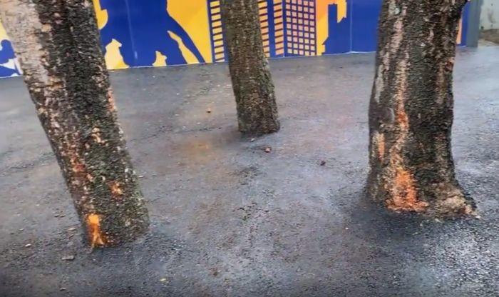 VIDEO: Trgovinski lanac asfaltirao i stabla ispred objekta