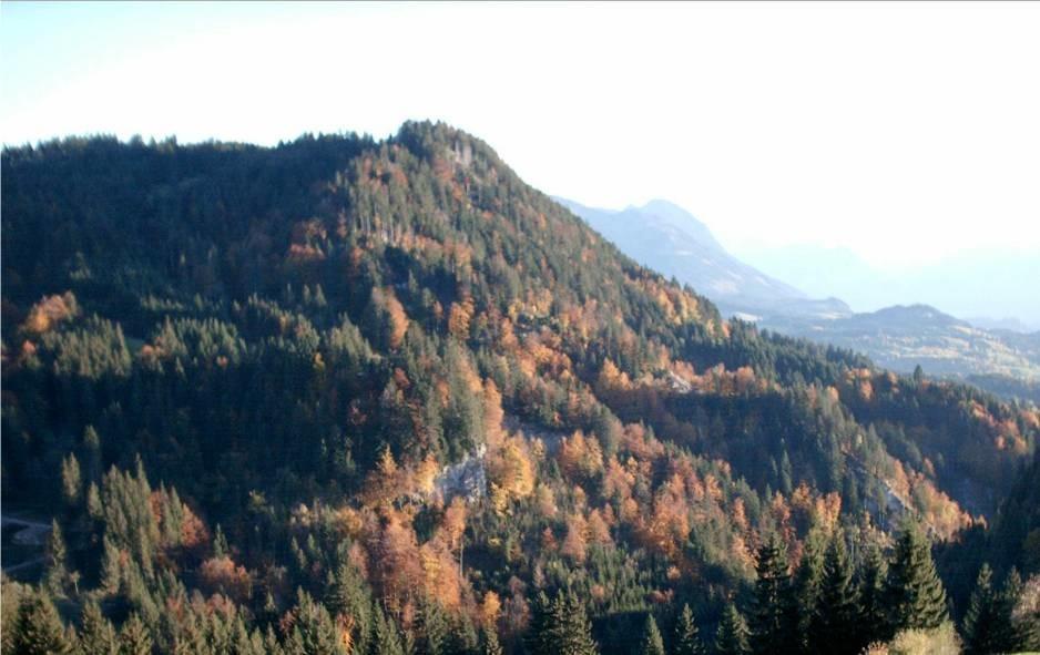 Zašto umiru nemačke šume?