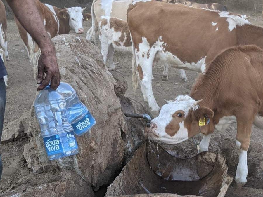 Donatori nude novac, iz javnih preduzeća kažu da nemaju cisterne sa vodom za životinje na Suvoj planini