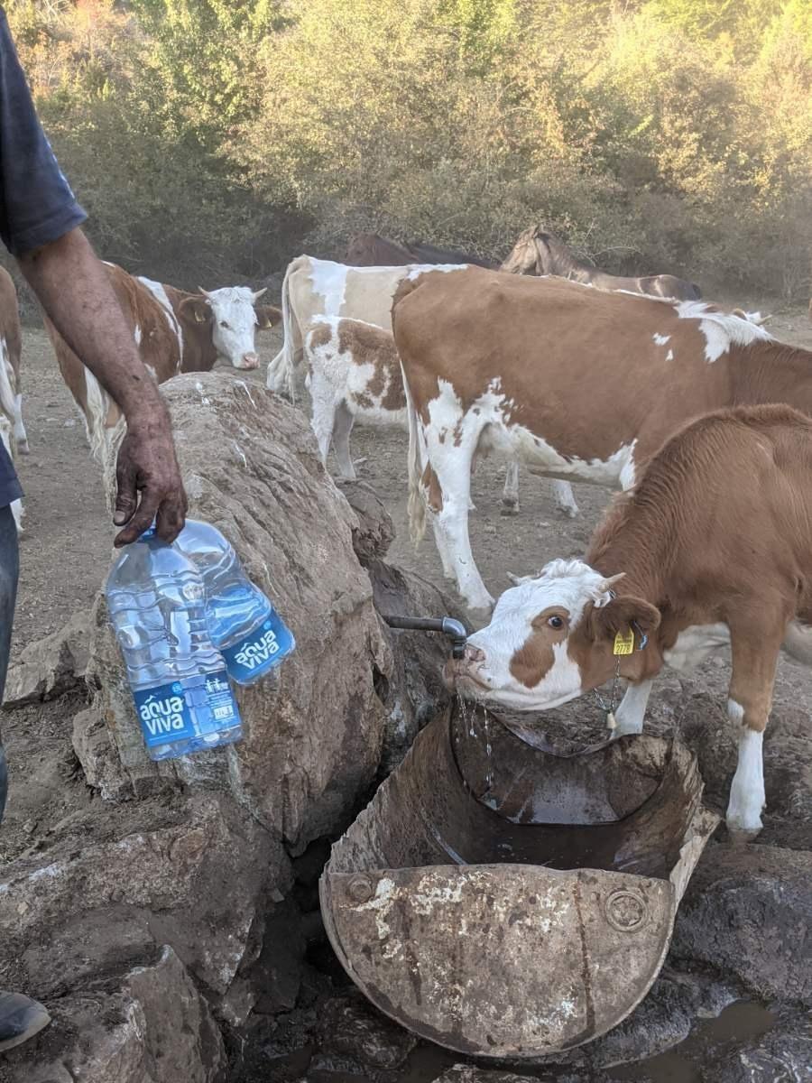 Opozicija traži da se hitno obezbedi voda životinjama na Suvoj planini, za sutra najavljen sastanak nadležnih