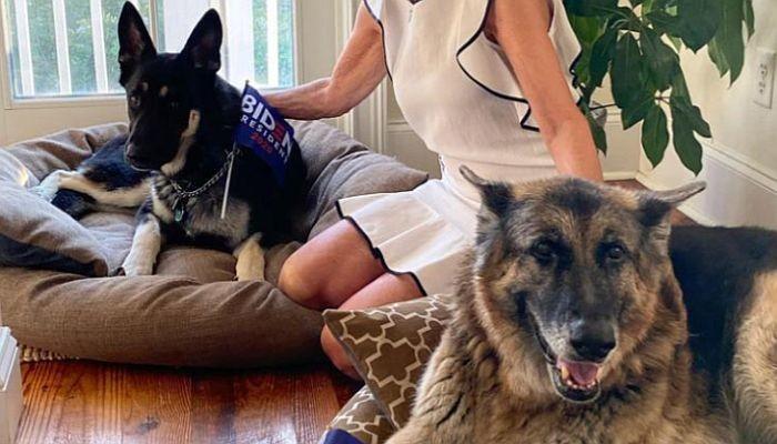 Bajdenov pas bio na obuci zbog ujedanja ljudi, pa ponovo napao obezbeđenje u Beloj kući