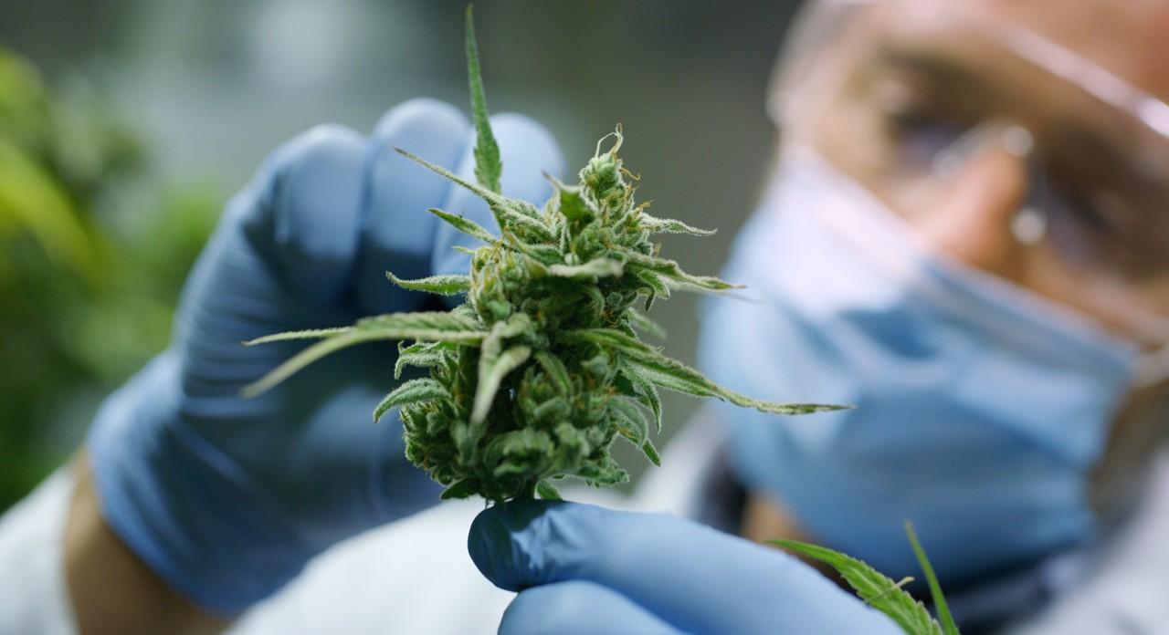 Njujork 15. američka država koja je legalizovala marihuanu