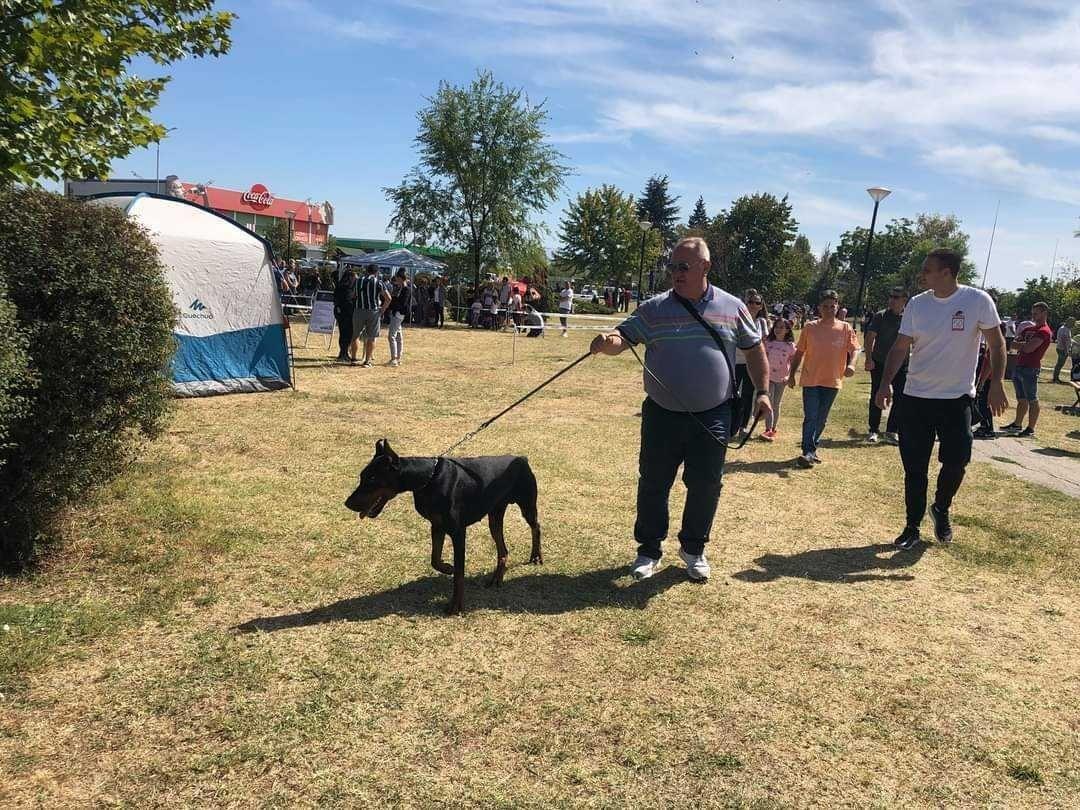 Nakon nagrade za najlepšeg štiglića i gradonačelnikov doberman osvojio nagradu na izložbi pasa u Leskovcu