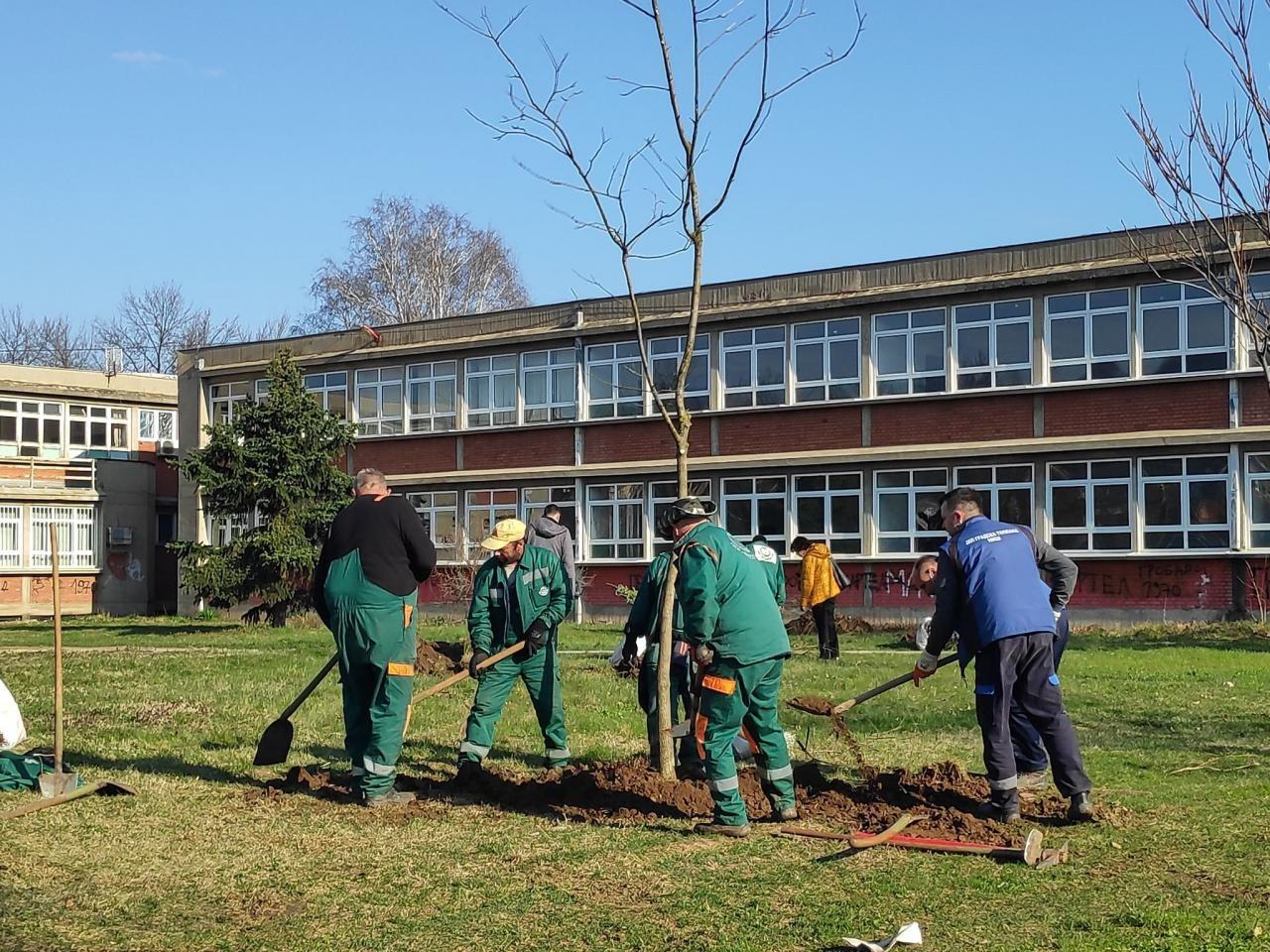 Zajedničko dvorište tri škole dobilo 30 stabala, za naredne dane najavljena sadnja 100 hrastova u Nišu