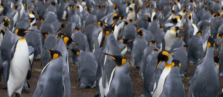 (FOTO) ČUDO PRIRODE! Kada budete videli OVOG pingvina bićete zgranuti, njegova BOJA je nestvarna!