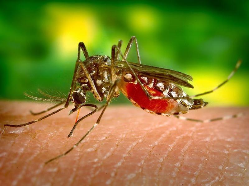Od srede četvrti tretman zaprašivanja komaraca u Jablaničkom okrugu
