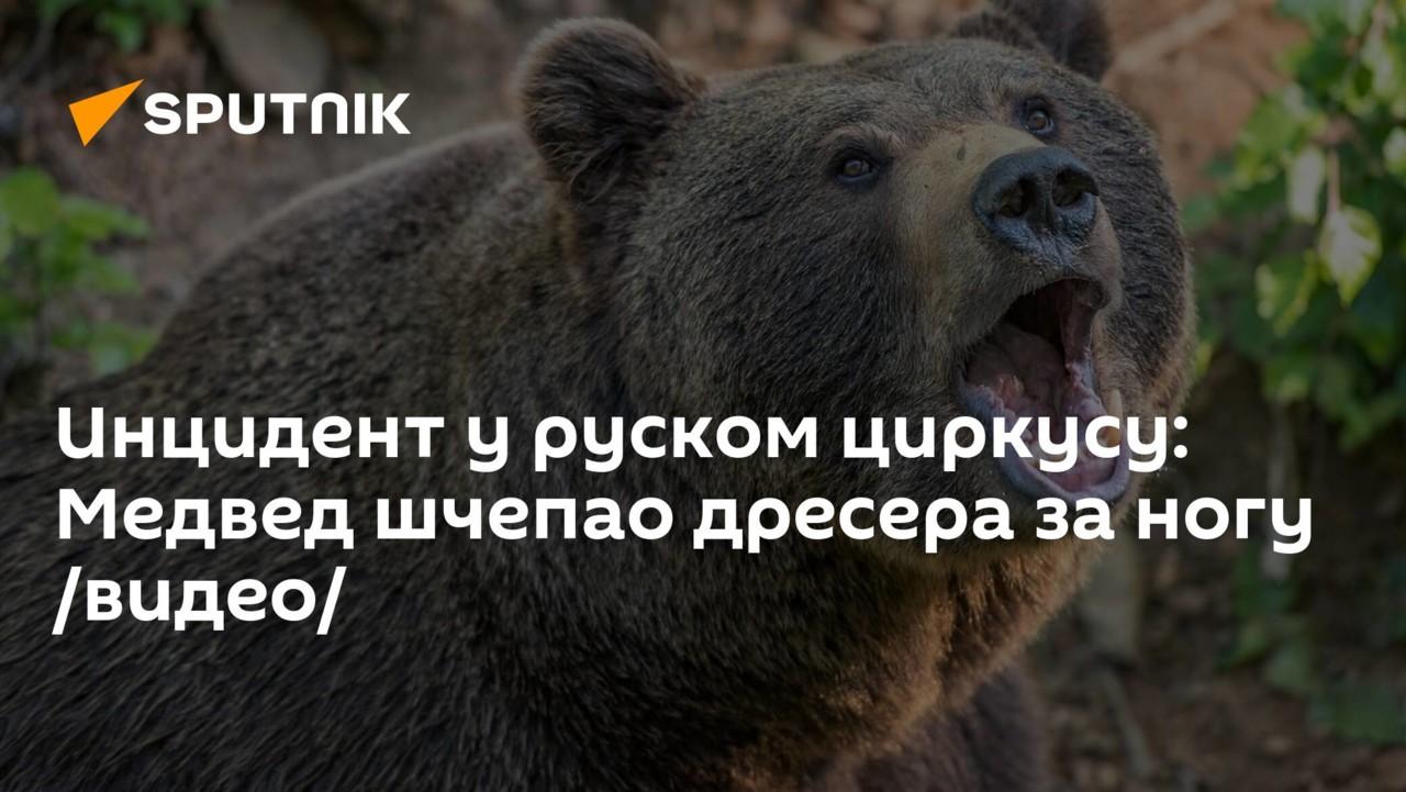 Инцидент у руском циркусу: Медвед шчепао дресера за ногу /видео/