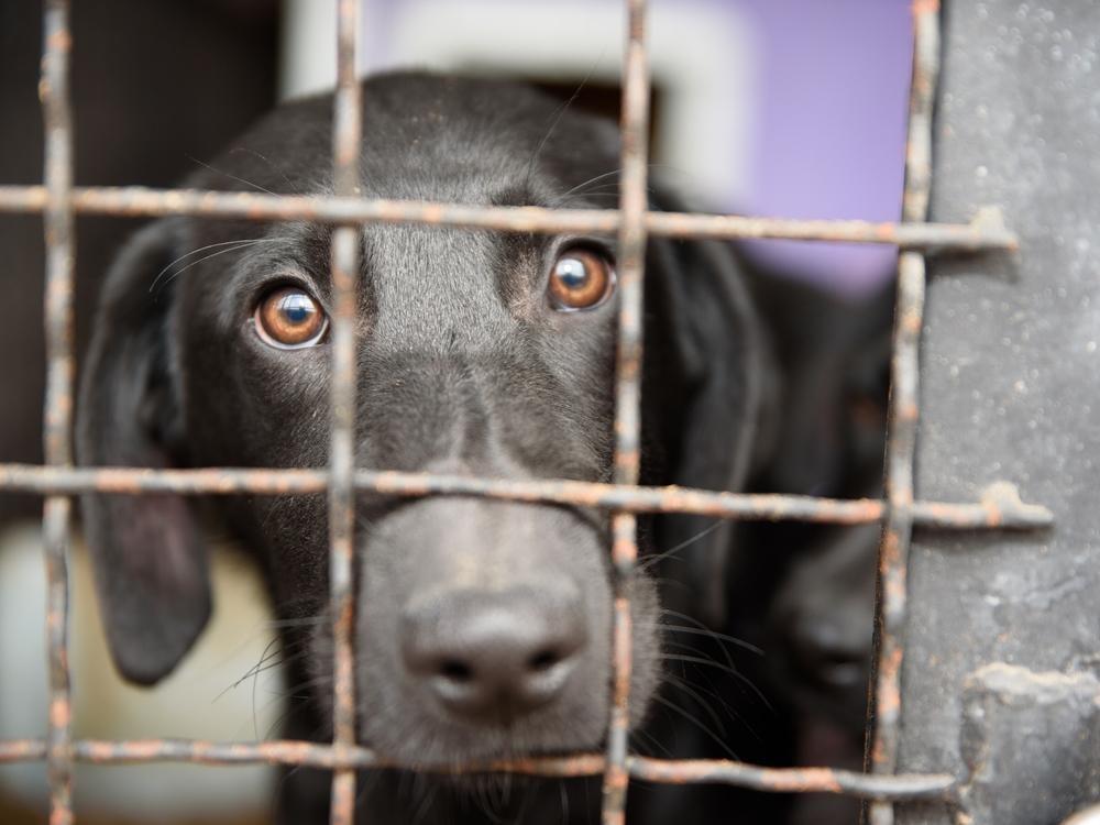 Udruženja pokrenula kampanju protiv najavljenog azila za pse, iz Grada Niša kažu prihvatilište još samo ideja