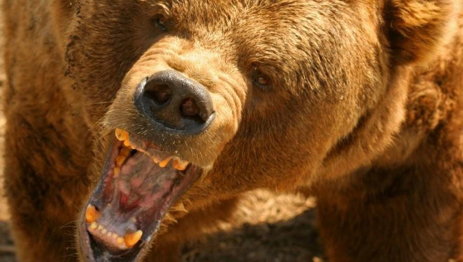 UZNEMIRUJUĆI SNIMA IZ RUSIJE: Medved u cirkusu ščepao dresera za nogu (VIDEO)