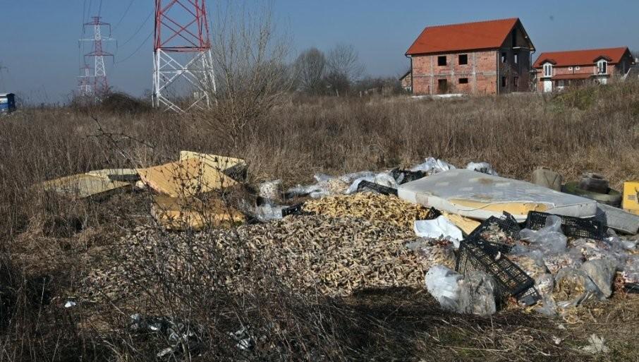 """SURČIN ZAGADILI  SA ČAK 15 TONA  PILEĆEG OTPADA: Radnici """"Veterine"""" nastavili da uklanjaju životinjske ostatke bačene na napuštene parcele"""