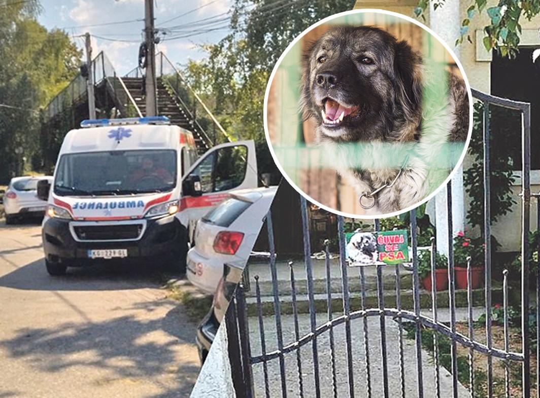 """""""Umalo me šlog nije udario"""": Komšinica otkrila DETALJE smrti gazdarice koju je izujedao pas u Kragujevcu"""